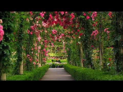 Devocional - 29 de Marzo [Dios no permite que nadie nos haga mal] - Charles Spurgeon