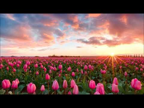 Devocional - de 30 de Marzo - [No se Afane por nada] - Charles Spurgeon