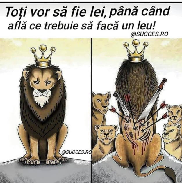 Todos quieren que sean un león hasta que  descubran lo que tiene que hacer un león!