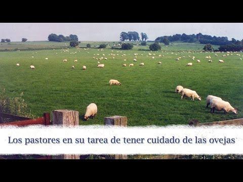 Charles Leiter - Los Pastores En Su Tarea De Tener Cuidado De Las Ovejas