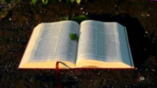 La importancia de las Escrituras para alcanzar la madurez  - Chuy Olivares