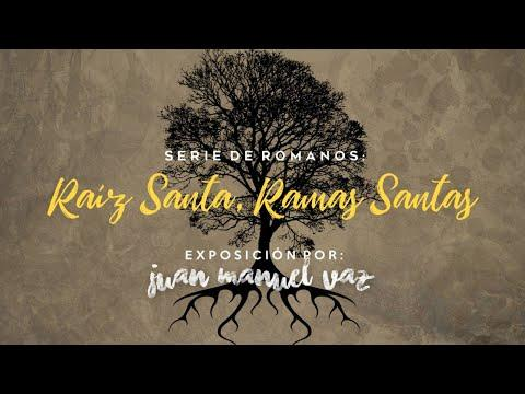 Juan Manuel Vaz - Raíz Santa, Ramas Santas