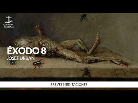 Héctor Bustamante - Breve meditación de Éxodo 8